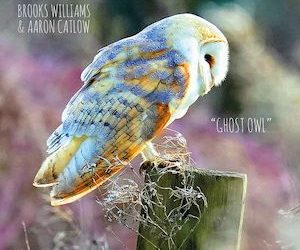 Ghost Owl – Brooks Williams & Aaron Catlow.