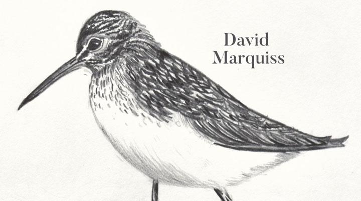 david Marquiss